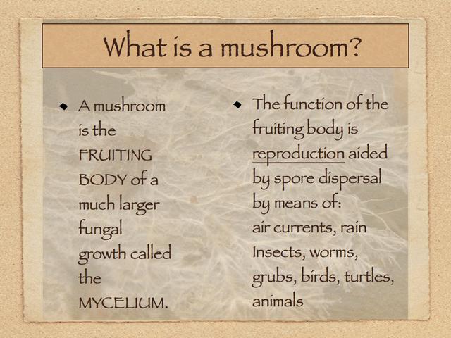 is a mushroom a vegetable