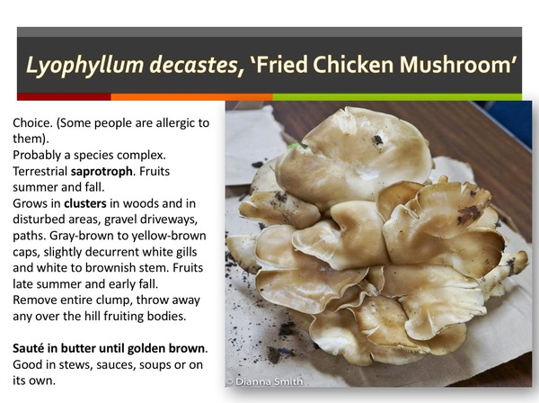 ONE HUNDRED+ EDIBLE MUSHROOMS & TOXIC LOOKALIKES by Dianna